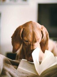chien-et-livre-plaisirs-du-confinement-psychez