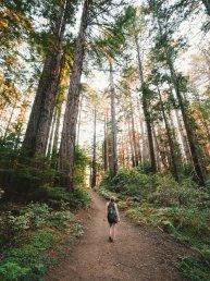 femme-promenade-en-forêt-psychezvous